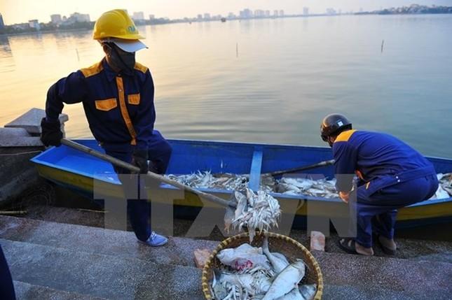 Vụ cá chết ở Hồ Tây: Chính phủ yêu cầu xác định rõ nguồn xả thải - ảnh 1