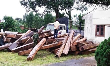 Gia Lai: Bắt gỗ lậu, 20 đối tượng tấn công kiểm lâm - ảnh 1
