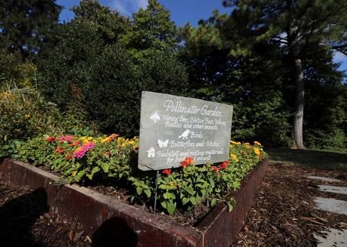 Bà Hillary hứa sẽ chăm sóc vườn rau của nhà Obama nếu đắc cử - ảnh 6