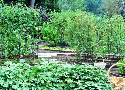 Bà Hillary hứa sẽ chăm sóc vườn rau của nhà Obama nếu đắc cử - ảnh 8