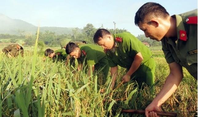 Dân Quảng Ninh chằng nhà, gặt lúa chạy đua với bão - ảnh 7