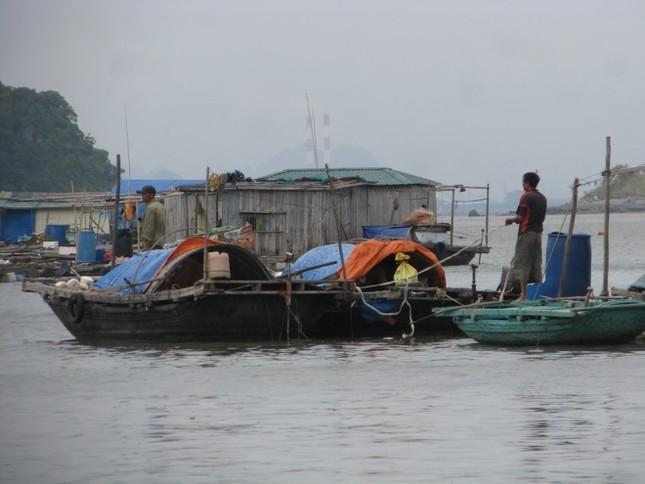 Dân Quảng Ninh chằng nhà, gặt lúa chạy đua với bão - ảnh 2
