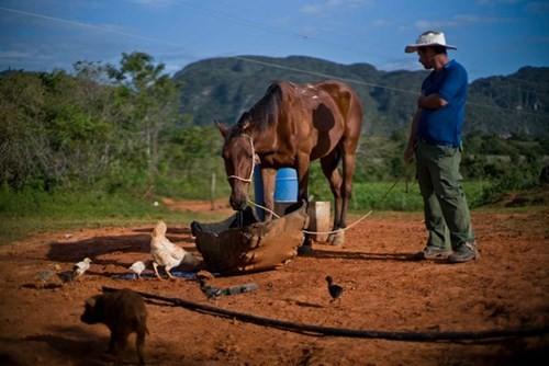 Quy trình sản xuất xì gà cầu kỳ ở Cuba - ảnh 4