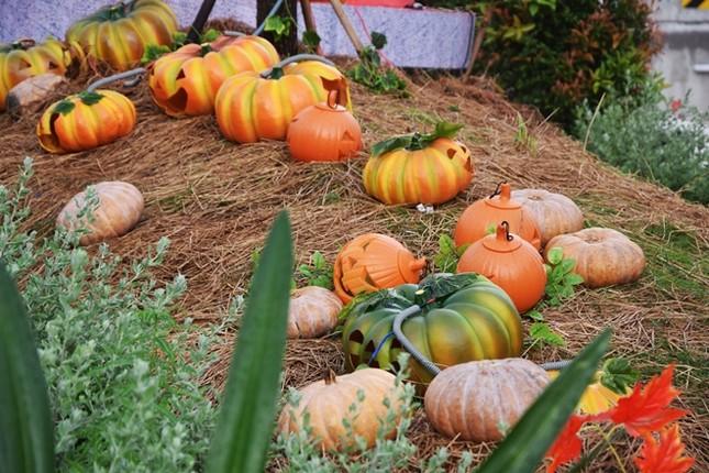 Vườn bí ngô hút khách dịp Halloween ở Sài Gòn - ảnh 2