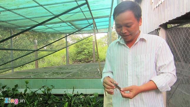Chủ trang trại cà cuống ở Sài Gòn thu tiền triệu mỗi ngày - ảnh 1