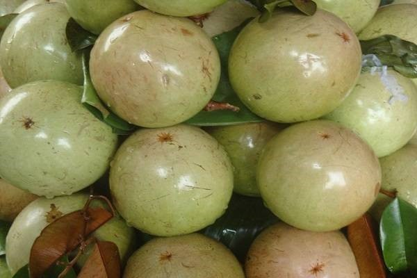 6 loại quả thuần Việt không bao giờ nhập khẩu từ Trung Quốc - ảnh 1