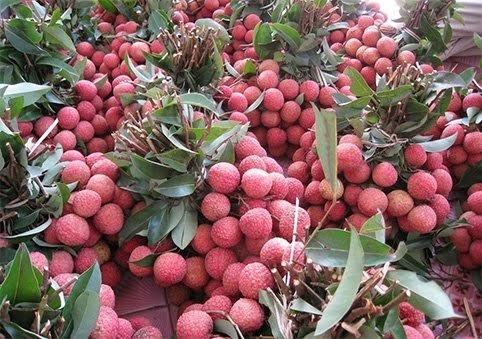 6 loại quả thuần Việt không bao giờ nhập khẩu từ Trung Quốc - ảnh 5