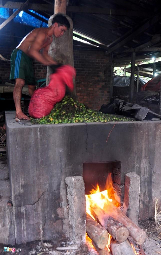 Dân làng ồ ạt hái cau non bán sang Trung Quốc - ảnh 11