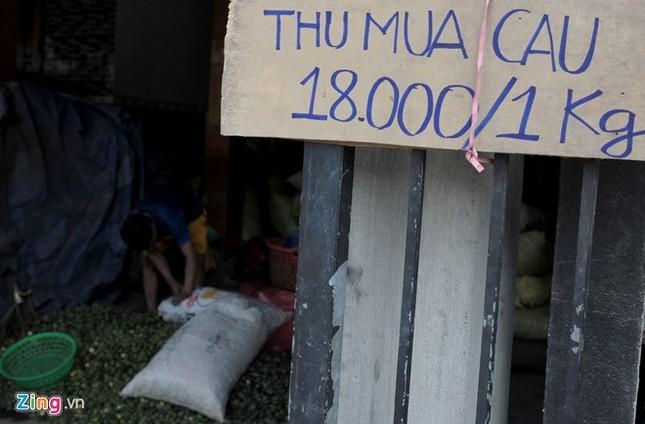 Dân làng ồ ạt hái cau non bán sang Trung Quốc - ảnh 3