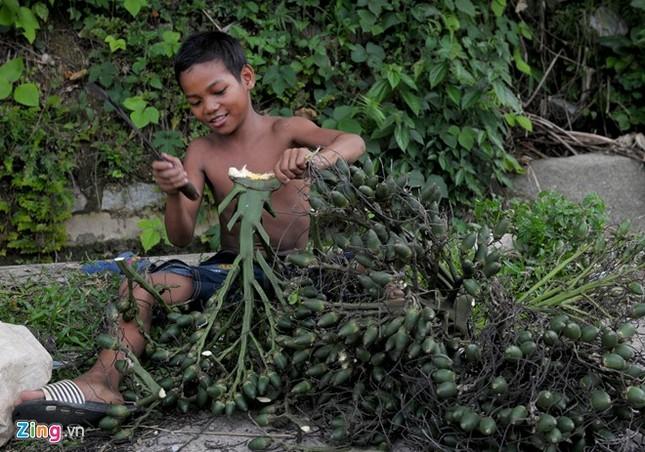 Dân làng ồ ạt hái cau non bán sang Trung Quốc - ảnh 5