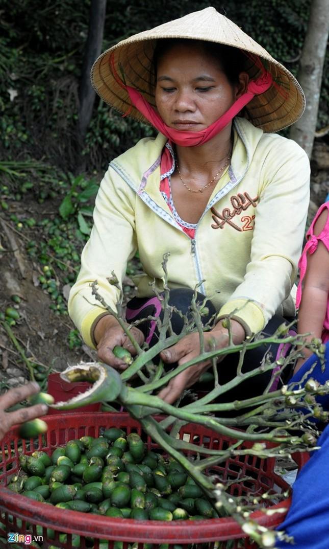 Dân làng ồ ạt hái cau non bán sang Trung Quốc - ảnh 6