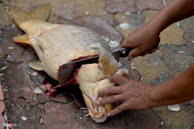 Cá chết hồ Tây vớt không xuể, xẻ thịt ngay tại chỗ - ảnh 9