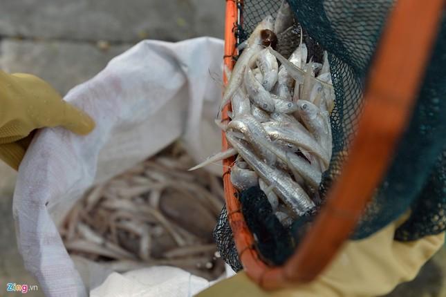 Cá chết hồ Tây vớt không xuể, xẻ thịt ngay tại chỗ - ảnh 12