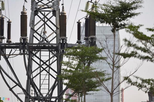 Hà Nội trồng cây dưới lưới điện 110 KV - ảnh 1