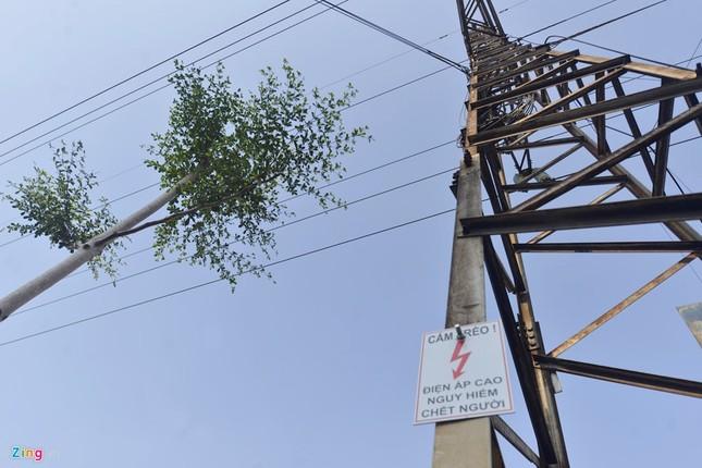 Hà Nội trồng cây dưới lưới điện 110 KV - ảnh 2