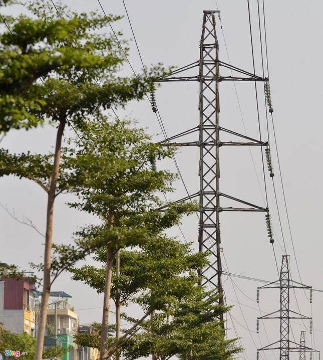 Hà Nội trồng cây dưới lưới điện 110 KV - ảnh 3