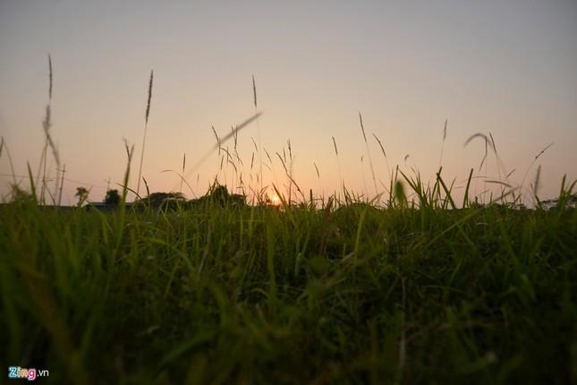 Khu sinh thái nghỉ dưỡng thành nơi chăn bò - ảnh 10