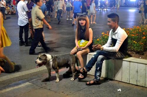 Bất an với chó dữ Becgie, Pitbull... lè lưỡi ở phố đi bộ hồ Gươm - ảnh 3