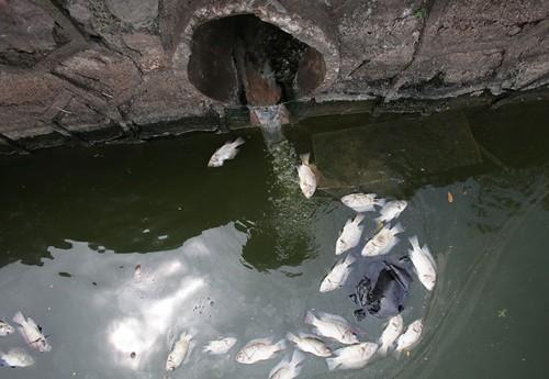 Tổng kiểm tra các hệ thống xả thải ra Hồ Tây - ảnh 1