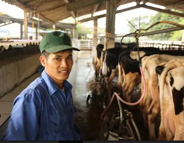 Thị trấn 600 tỷ phú, lái ôtô dạo thăm bò ở Việt Nam - ảnh 1