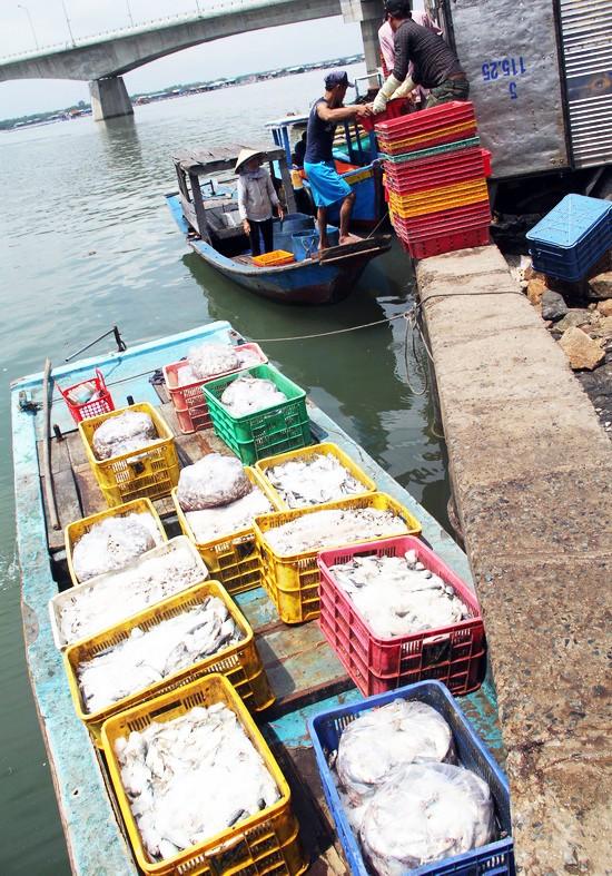 Người dân làng bè Vũng Tàu điêu đứng vì cá chết trắng - ảnh 8