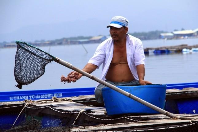Người dân làng bè Vũng Tàu điêu đứng vì cá chết trắng - ảnh 5