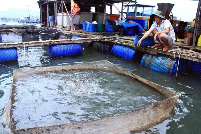 Người dân làng bè Vũng Tàu điêu đứng vì cá chết trắng - ảnh 1