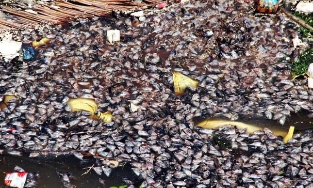 Người dân làng bè Vũng Tàu điêu đứng vì cá chết trắng - ảnh 6