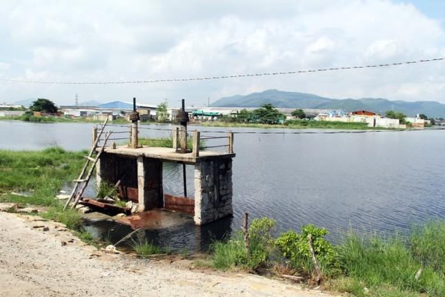 Người dân làng bè Vũng Tàu điêu đứng vì cá chết trắng - ảnh 10