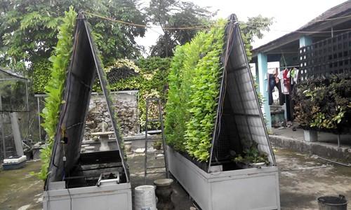 Tháp rau 6m2 cho thu hoạch gần 30 kg chỉ sau một tháng - ảnh 3