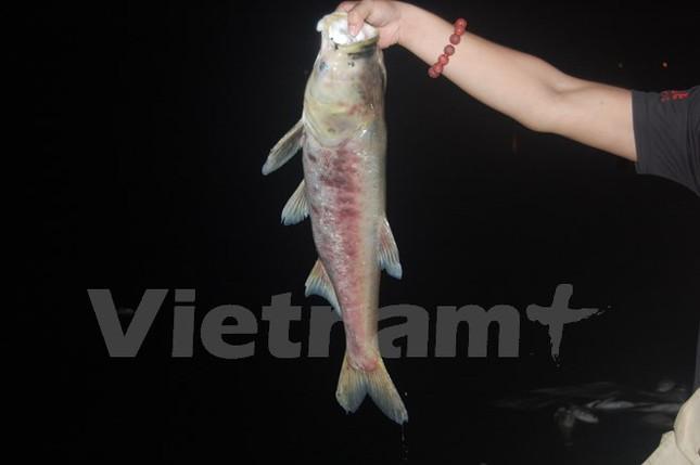 Cá chết dạt vào bờ dài cả km ở hồ Linh Đàm - ảnh 2