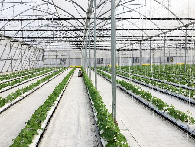 Vingroup ra mắt sản phẩm trái cây nhà kính đầu tiên  - ảnh 3