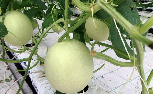 Vingroup ra mắt sản phẩm trái cây nhà kính đầu tiên  - ảnh 1