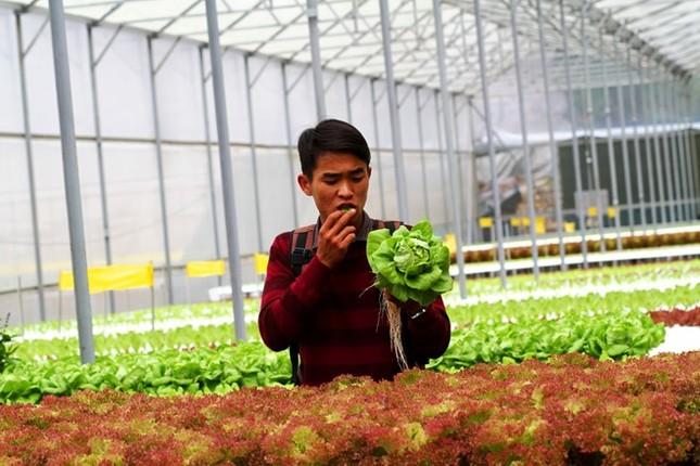 Rau thủy canh thu hoạch 15 vụ mỗi năm, ăn không cần rửa - ảnh 12