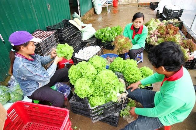 Rau thủy canh thu hoạch 15 vụ mỗi năm, ăn không cần rửa - ảnh 14