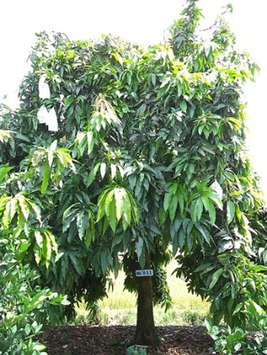 Nở rộ mô hình trồng cây qua mạng - ảnh 1