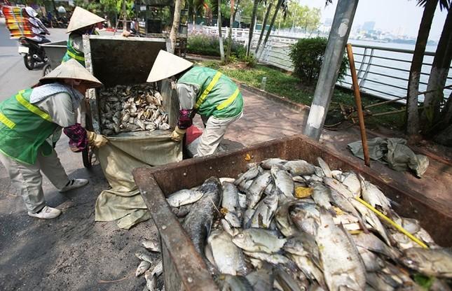 Hồ Tây sau 10 ngày cá chết hàng loạt - ảnh 5