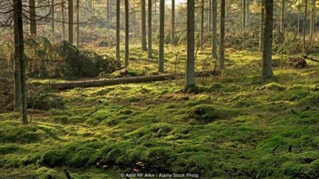 Những đầm lầy chứa xác chết bí ẩn ở Đan Mạch - ảnh 1