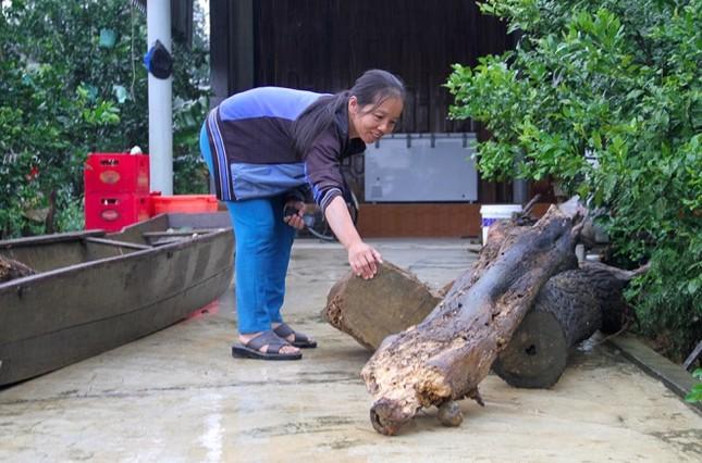 Nhiều người bất chấp nguy hiểm vớt gỗ giữa lũ - ảnh 10