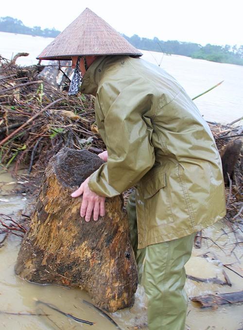 Nhiều người bất chấp nguy hiểm vớt gỗ giữa lũ - ảnh 5