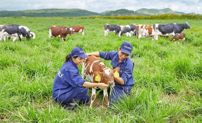 Vinamilk ra mắt sữa tươi 100% Organic đầu tiên sản xuất tại Việt Nam - ảnh 1
