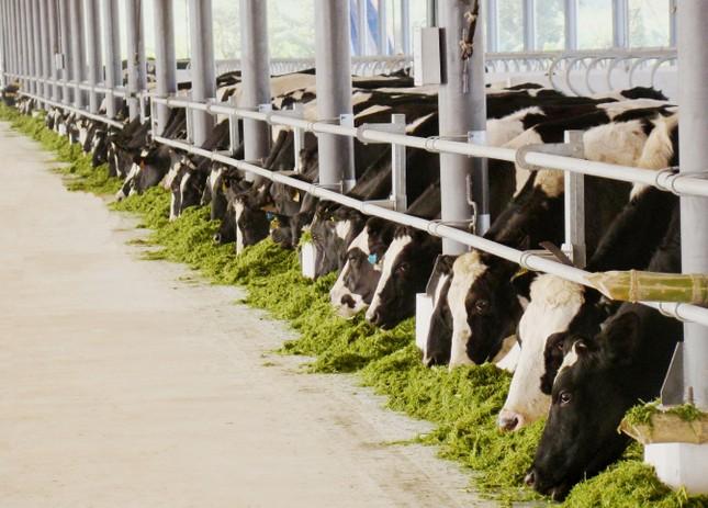 Thương hiệu sữa Việt 40 năm với kỳ tích xuất khẩu đi 43 nước trên thế giới    - ảnh 1