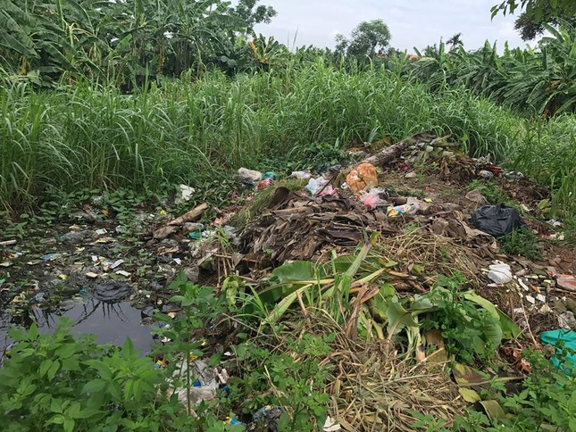 Vĩnh Thịnh: Hiểm hoạ ô nhiễm môi trường do nuôi bò sữa - ảnh 3