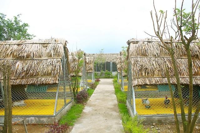 Một ngày 'tập làm nông dân' tại nông trang xanh FLC Vĩnh Phúc - ảnh 1